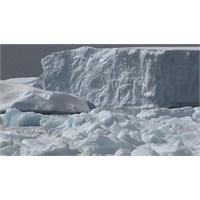 Antartika'nın Derinliklerinde Yaşam