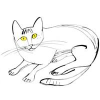 Bir Kedi