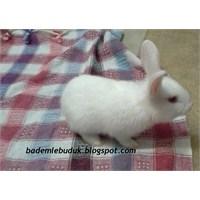 Tavşanlara Tuvalet Eğitimi