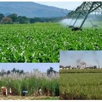 İnovatif tarımı sambacılardan öğrenelim