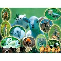 Hayvanlar Üzerine İlginç Bilgiler...