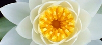 Eviniz Bahar Çiçekleriyle Güzelleşsin