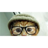 Ne Kedisiz Ne Kitapsız: Kedili Kitaplar