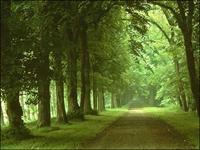Yeşil Bir Tüketici İsen Yolunu Kolay Bulursun...