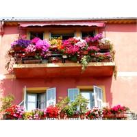 Balkon Dekorasyonunda Balkon Çiçekleri