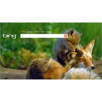 Bing Kendini Yenileme Kararı Aldı