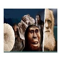 Evrimciler Ve Teorinin Mantıksızlığı