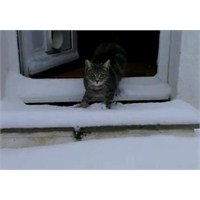 Kedi Fletcher Youtube 'da İzlenme Rekoru Kırıyor