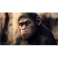 """""""Planet Of The Apes""""in Devamına Yeni İsim Ve Tarih"""