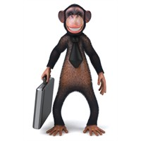 Maymunları Yönetebiliyor Musunuz ?