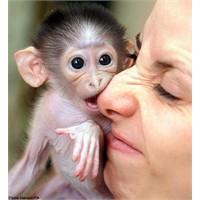 Farklı Embriyolardan Oluşan İlk Maymunlar