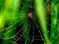 Örümcekler Nasıl Ağ Örer (animasyon)