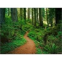 Ağaçlık Alanlar Ve Parklar Bağışıklığı Arttırıyor