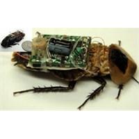 Bu Böcek Depremde Sizi Bulacak