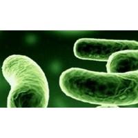 Enfeksiyon Hastalığı Ve Bitkisel Tedavisi