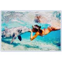 Yunuslarla Yüzebileceğiniz 7 Yer