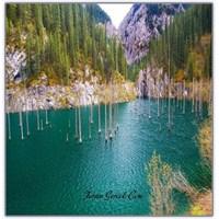 Batık Bir Orman | Kaindy Gölü (Kazakistan)