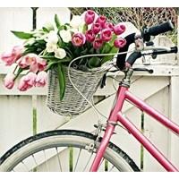 Nereden Geliyor Bu Bisiklet Aşkı?