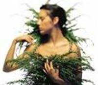 Cilt Güzelliği İçin Şifalı Bitkiler