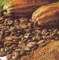 Kakao Yağı Nın Faydaları