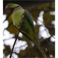 Gülhane Parkı'nın Mülteci Papağanları