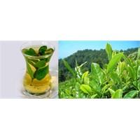Güneşten Korunmak İçin Yeşil Çay Tüketin