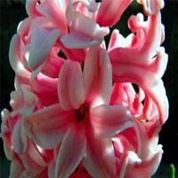 Baharda Ev Bitkilerine Bakım Önerileri