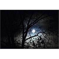 Bir Ay Hüzmesi İçin…