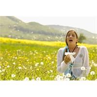 Alerjiye Faydalı Süper Bitkiler