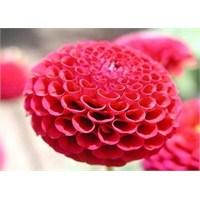 Burcuna Göre Çiçek Seç…