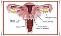 Rahim Ağzı Kanseri / Belirtileri