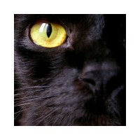 Kara Kedi Uğursuzluğu