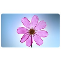 Çiçekler Gerçekten Evin Havasını Temizlermi?