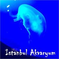 İstanbul Akvaryum | Karadeniz'den Pasifik'e...