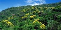 Dünya Ormanlarının Yarısı 5 Ülkede