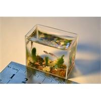 Dünyanın En Küçük Akvaryumunda Balıklar