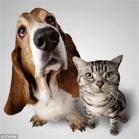 Köpek Kediden Daha Zekiymiş, Hadi Canım Sende!