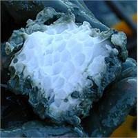 Metan Hidrat Klatrat