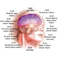 Uyku Düzeni Ve Melatoninin Önemi