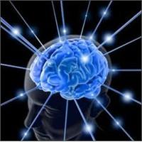 Beynimiz İnterneti Benimsedi: Transaktif Bellek Ve