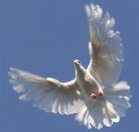 Pekin de Güvercin Uçurtmak Yasaklandı