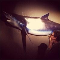 Köpek Balığı Dünyası Sergisi'ne Gitmeyenlere...