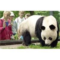 Dünyanın En Yaşlı Pandası Bao Bao Öldü