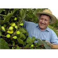 Bahçıvanlık Kursunu Bitirenin İşi Hazır