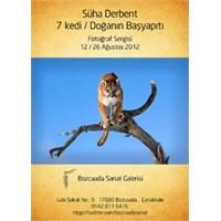 Süha Derbent ''7 Kedi'' Sergisi Bozcaada'da Açıldı