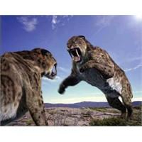Büyük Kedilerin Dünyası