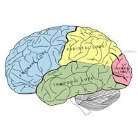 İnsan Beyninin Gizemli 10 Özelliği
