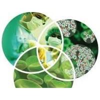 Nanoteknoloji İle Kök Hücreden Diş Üretimi