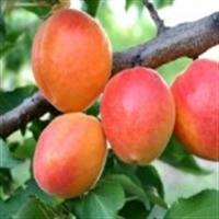 Sağlığın Anahtarı 3 Meyve