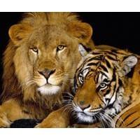 Hayvanlarda  Aile Plânlaması
